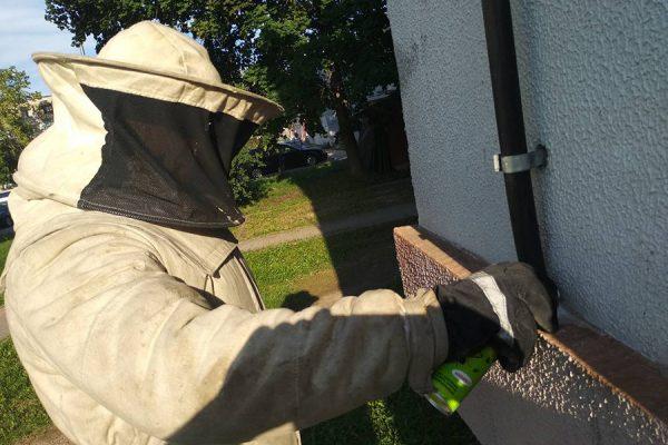 Осиное гнездо: инструкция по избавлению