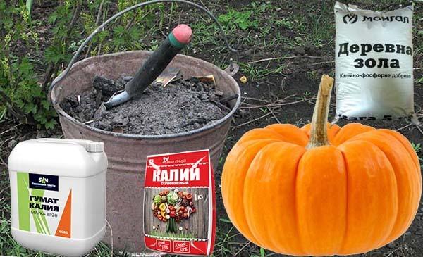 Удобрения для тыквы
