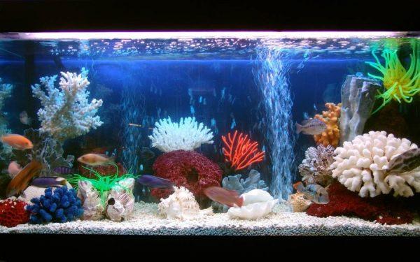 Чистим аквариум с рыбками правильно