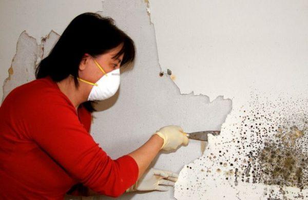 Избавляемся от плесени на стенах в квартире