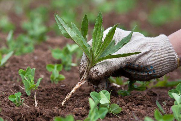 Как избавиться от травы на участке