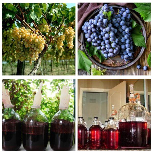 Домашнее вино из винограда: простые рецепты