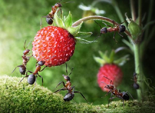 7 эффективных способов избавиться от муравьев на огороде