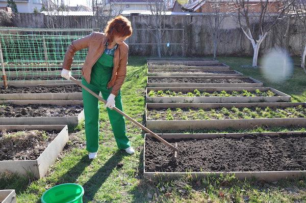 Когда копать огород: осенью или весной