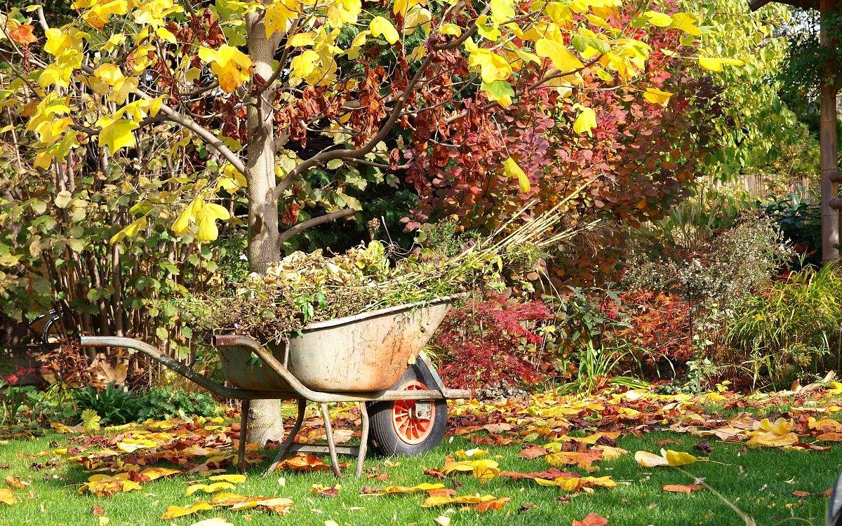 Как подготовить плодовые деревья к зиме правильно