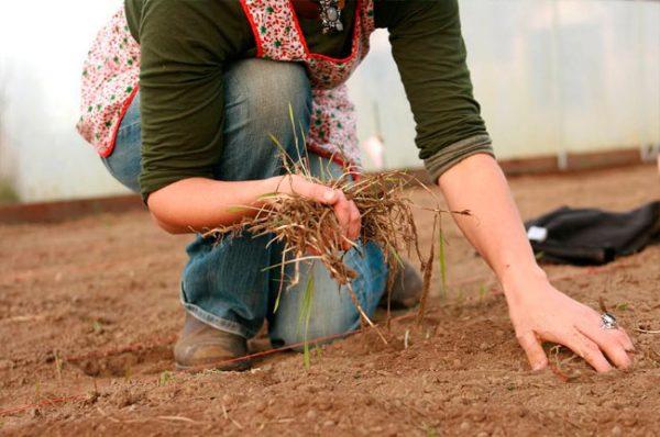 Чем лучше обработать землю в теплице осенью
