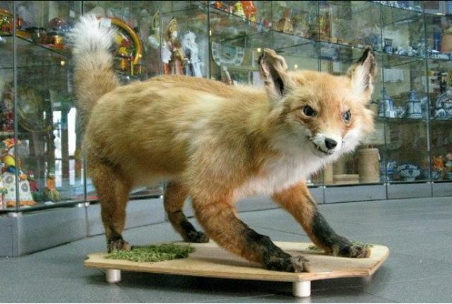 чучело лисы купить