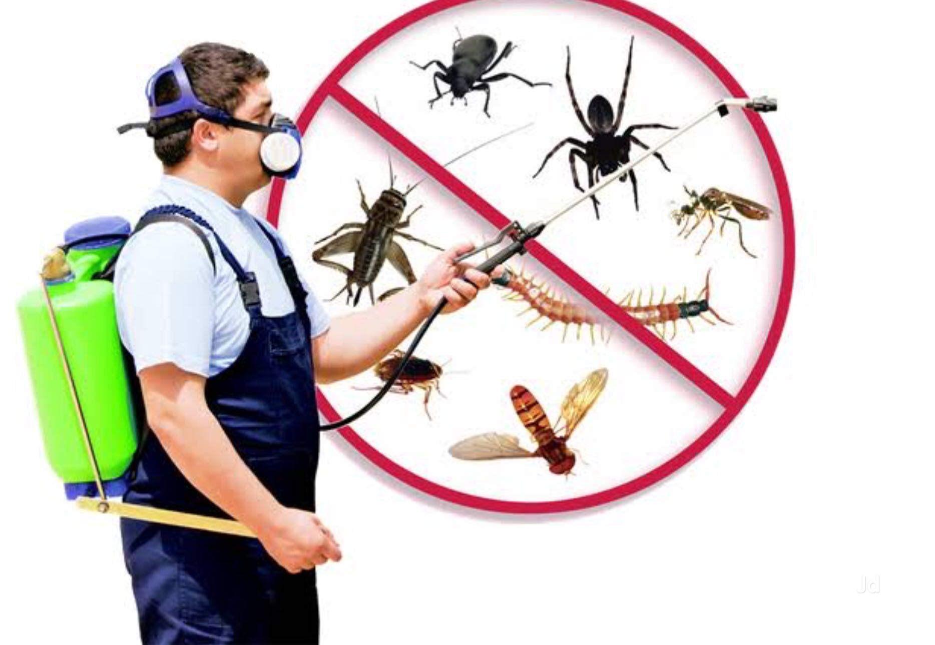 Услуги служб по борьбе с насекомыми: достоинства