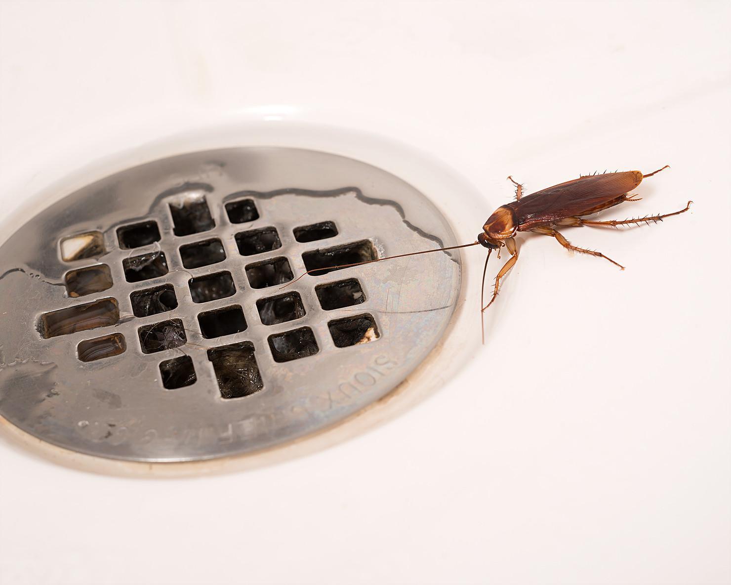 Почему появляются тараканы в квартире?